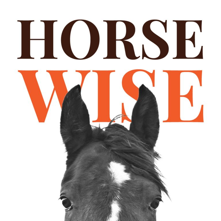 My favorite way to coach at Horse Wise